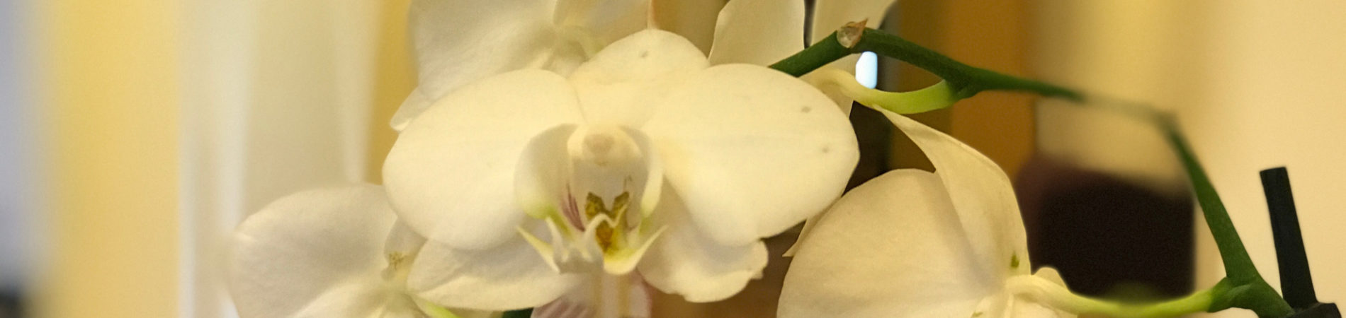 Blomma2